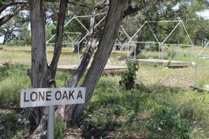 Friedrich Camping - Lone Oak A