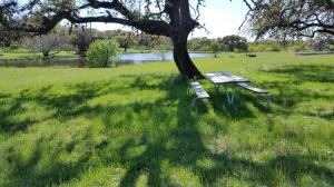 Picnic Area - Lake